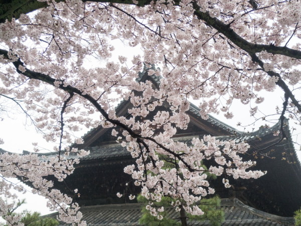 sakura and roof tiles #2