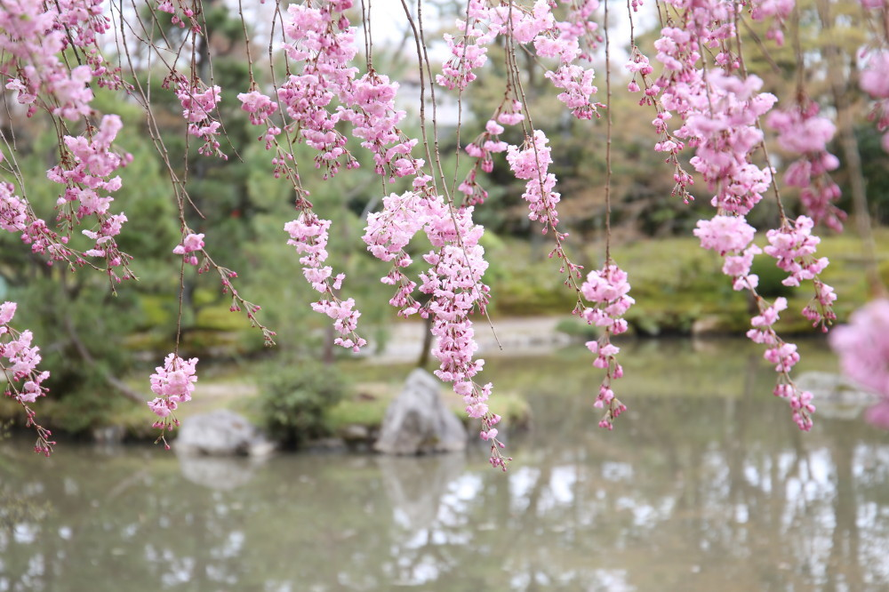 Under the blossoms #2