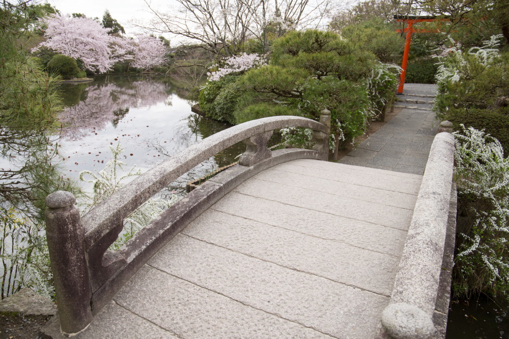 Sakura and a stone bridge