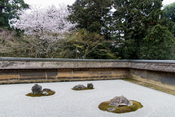 Sakura beside a famous rock garden