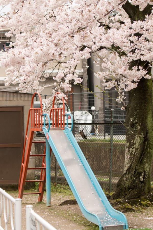 Sakura and a slide