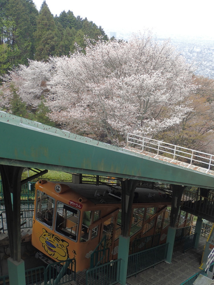 Sakura and a cable car