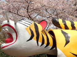 Sakura and a tiger