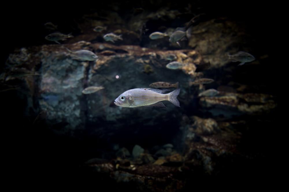 aquarium #1