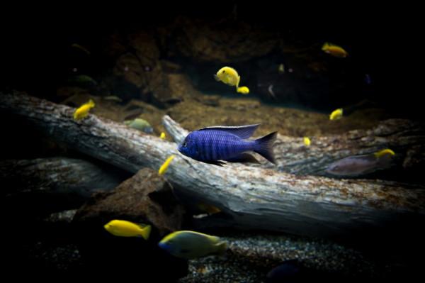 aquarium #2