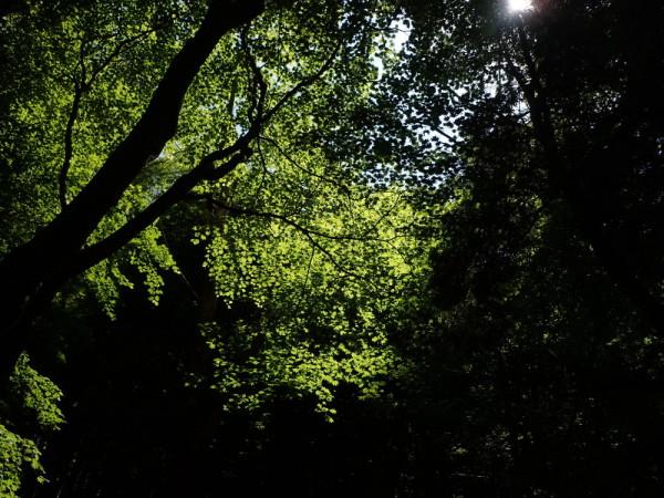 May Green #1