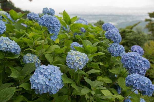 June flowers #1