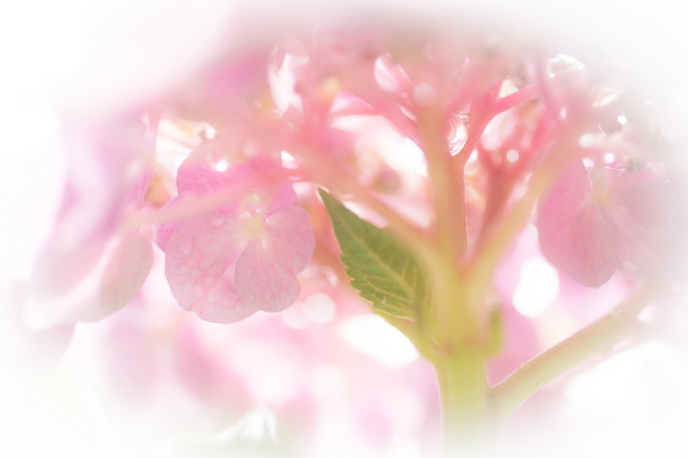 June flowers #2