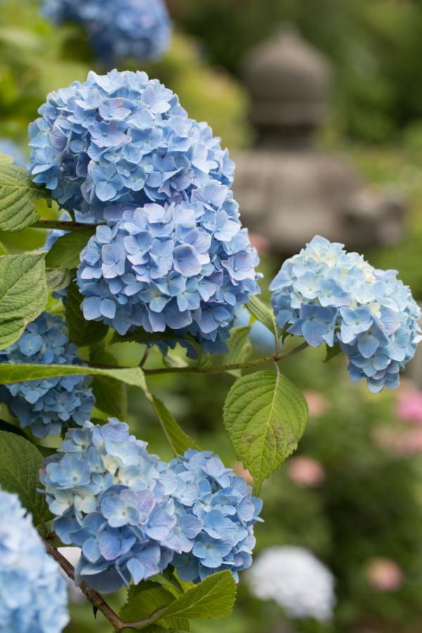June flowers #3