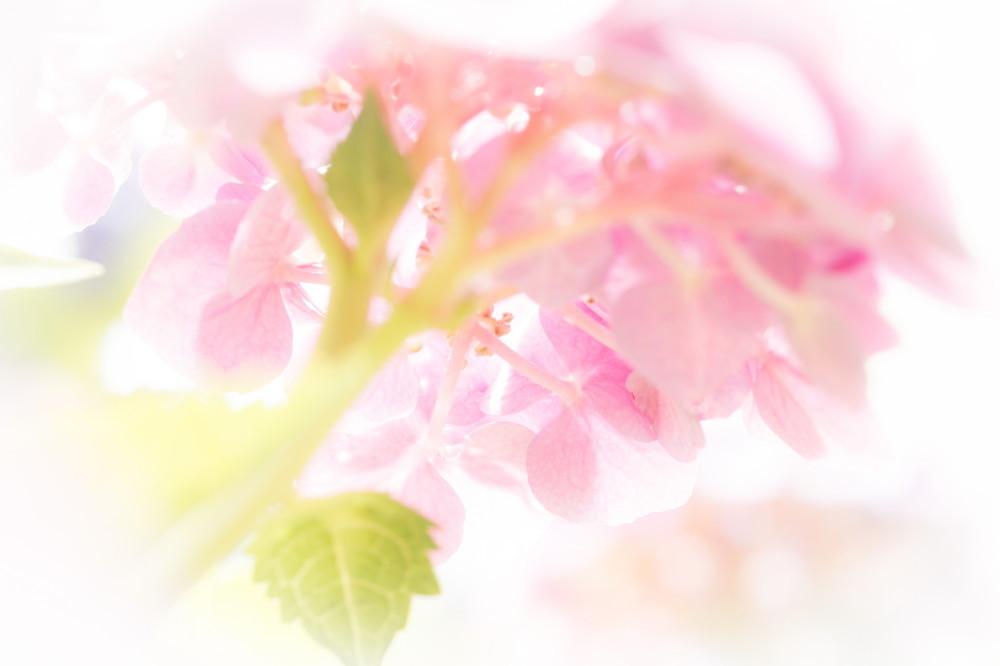 June flowers #4