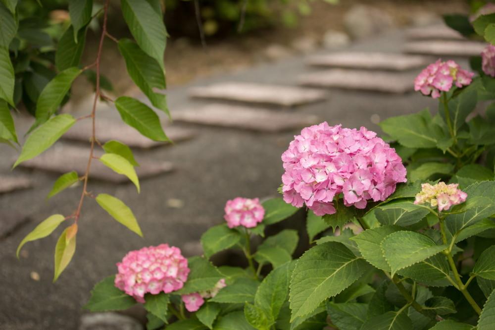 June flowers #5