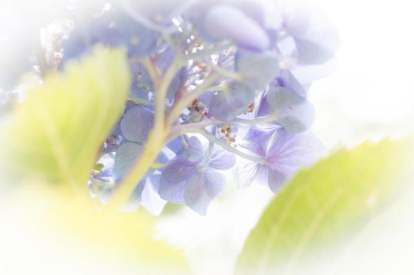 June flowers #6