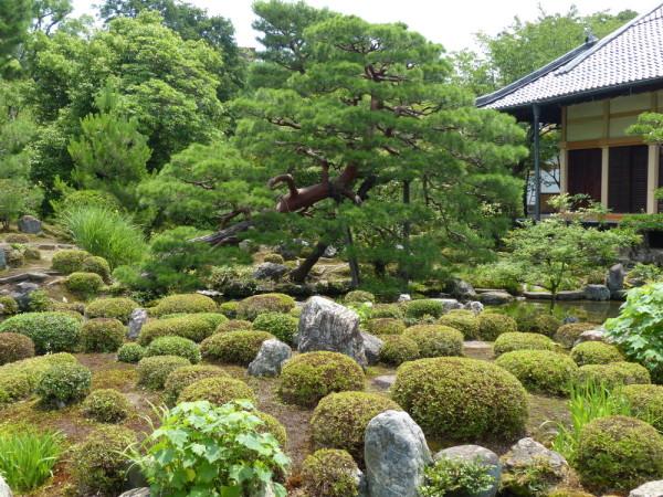summer garden #1