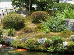 summer garden #5