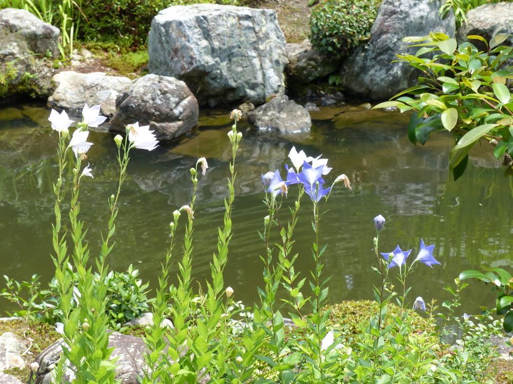 summer garden #6