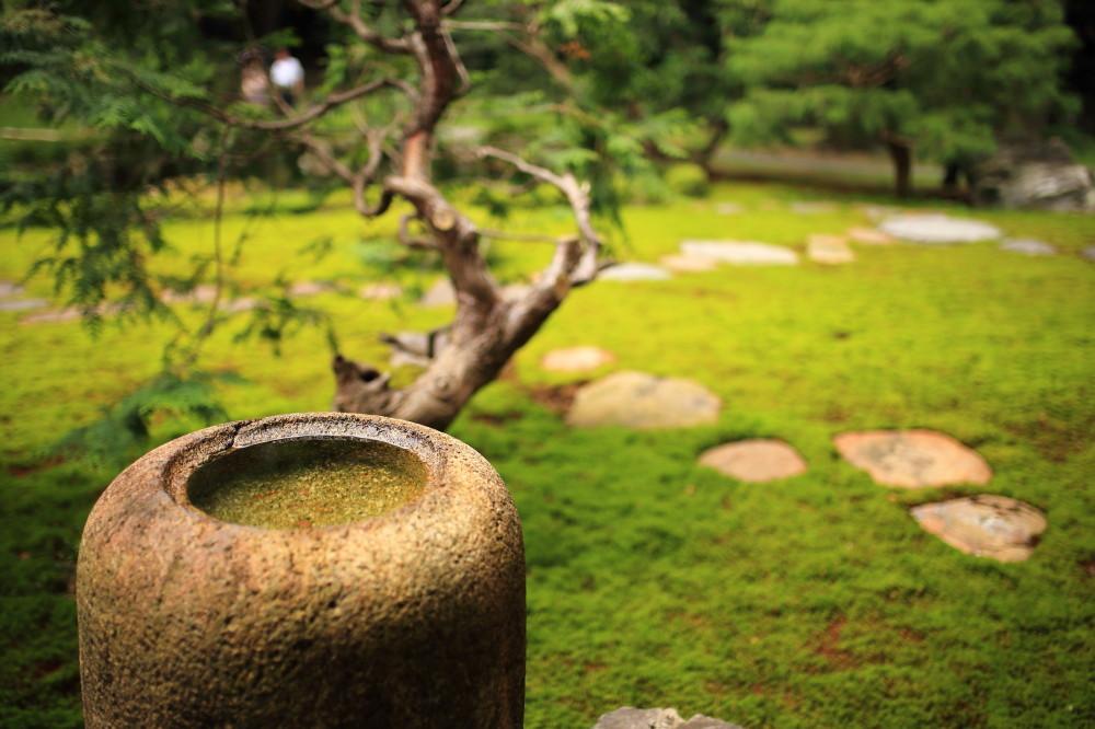 in a garden #1