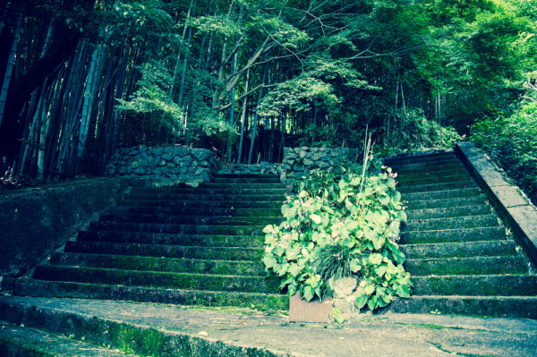 stairway to bamboo thicket