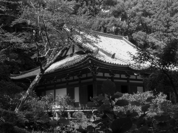Nara in BW #2