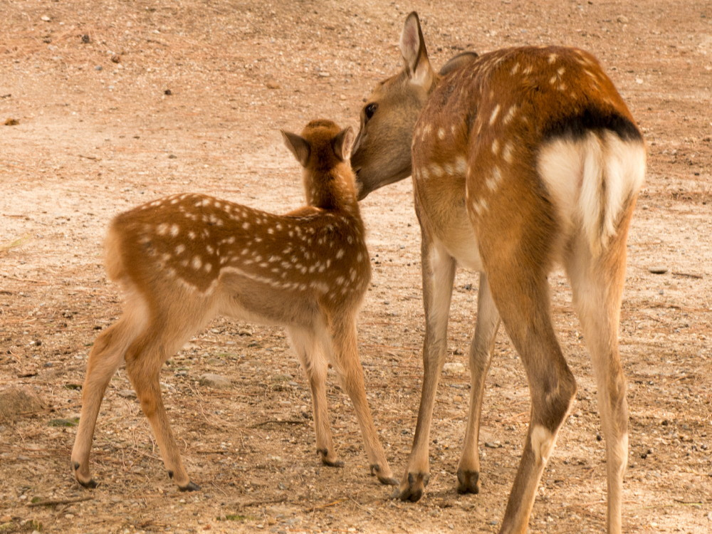 dear deer #2