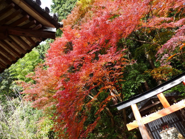 torii and leaves