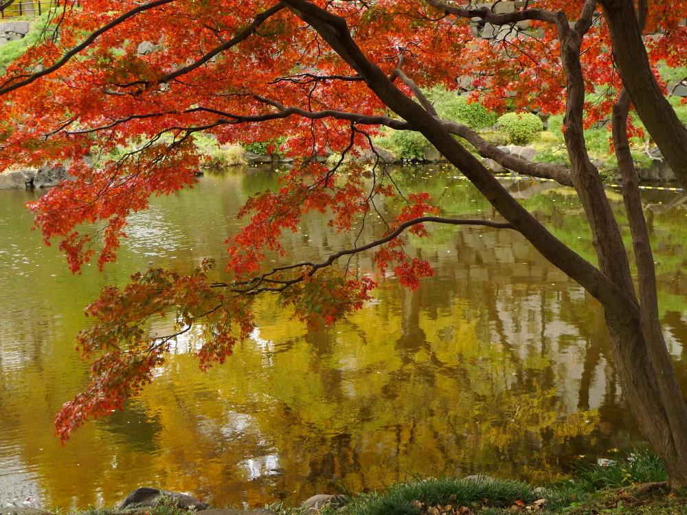 autumn in Tokyo #2