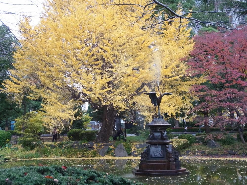 autumn in Tokyo #3