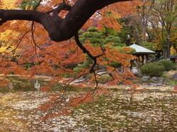 autumn in Tokyo #4