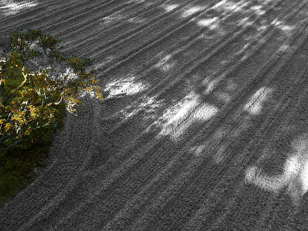 sand art #2