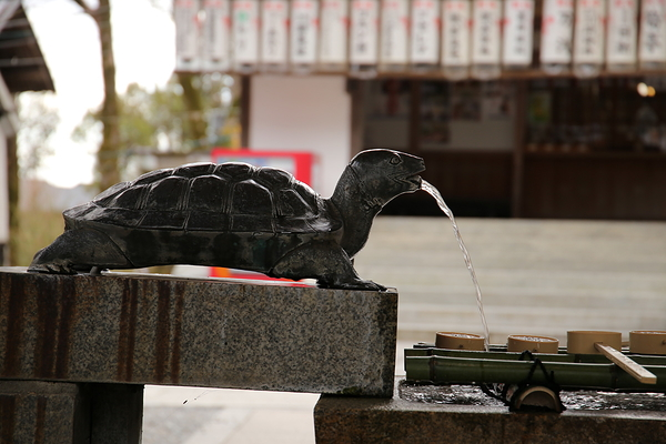 tortoise fountain #2