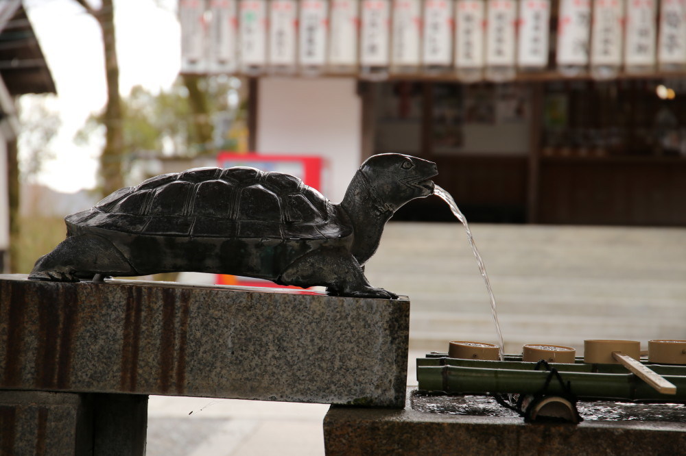 tortoise fountain #2