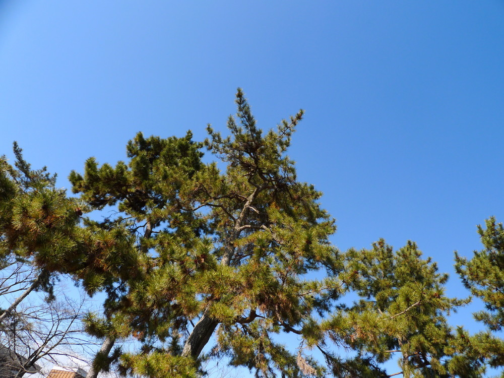 blue sky #3