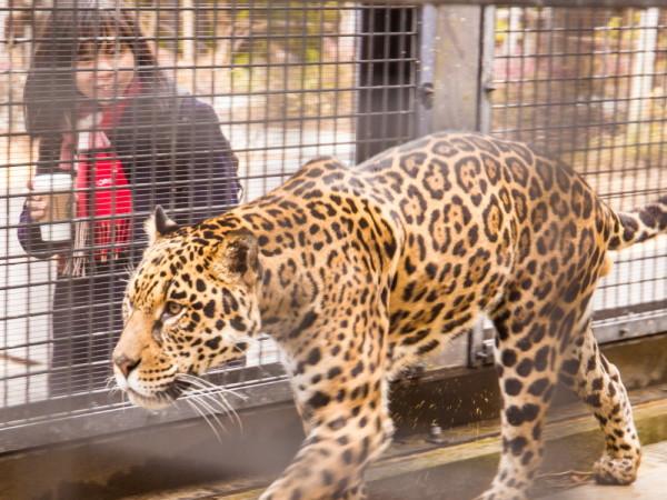 friendship at a zoo #1