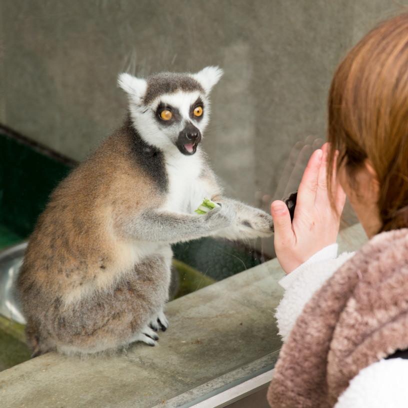 friendship at a zoo #2