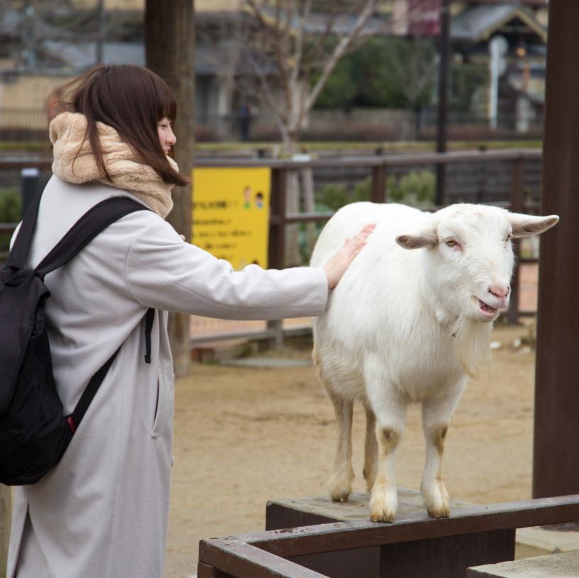 friendship at a zoo #3