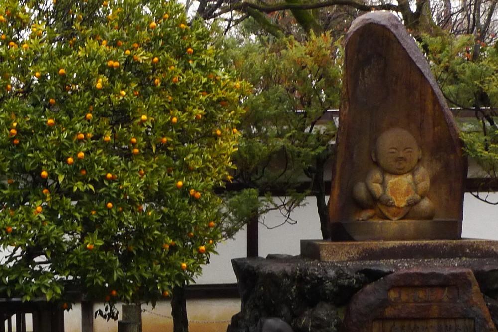 Jizo likes citrus