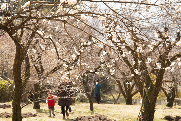 in the plum orchard #1