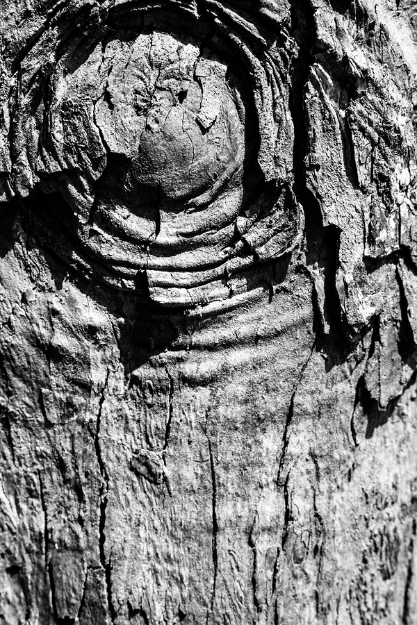 eye of the wood
