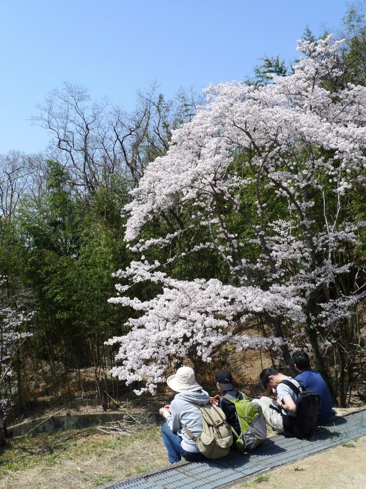 Sakura and family