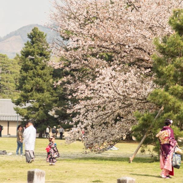 Sakura and family in Kimono