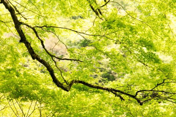 season of young green #4