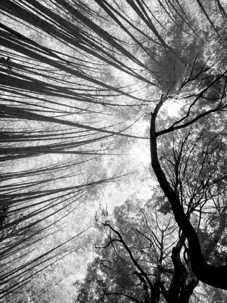 bamboo forest #9