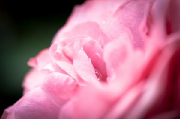 gentle pink