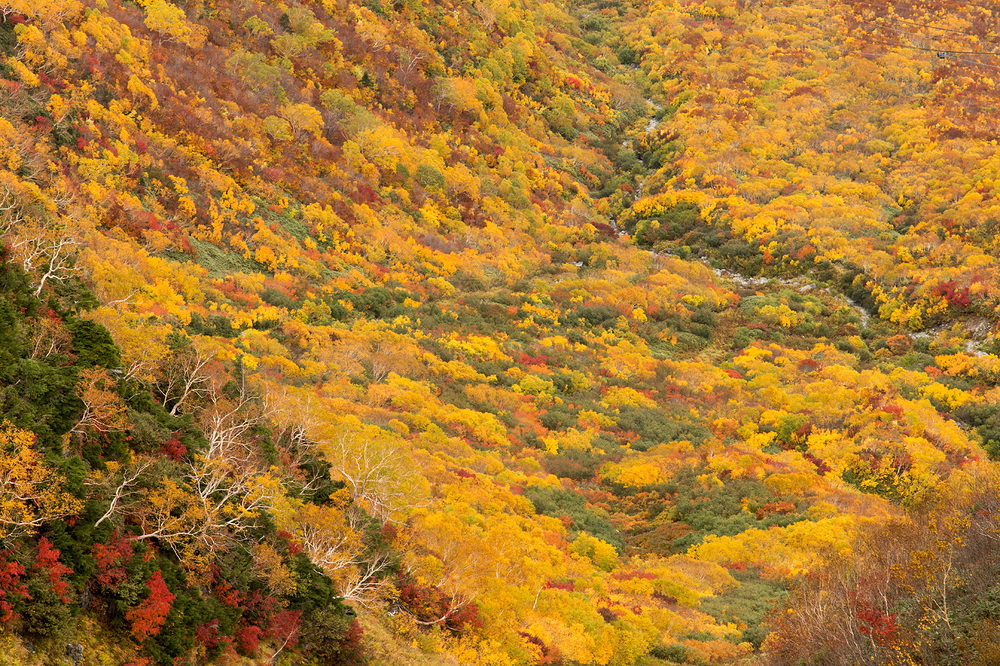 Autumn comes earlier in highlands #3