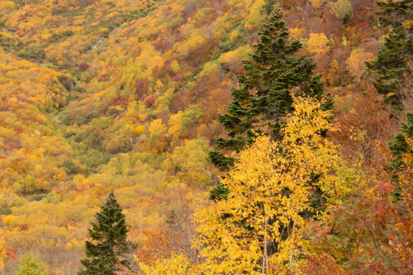 Autumn comes earlier in highlands #5