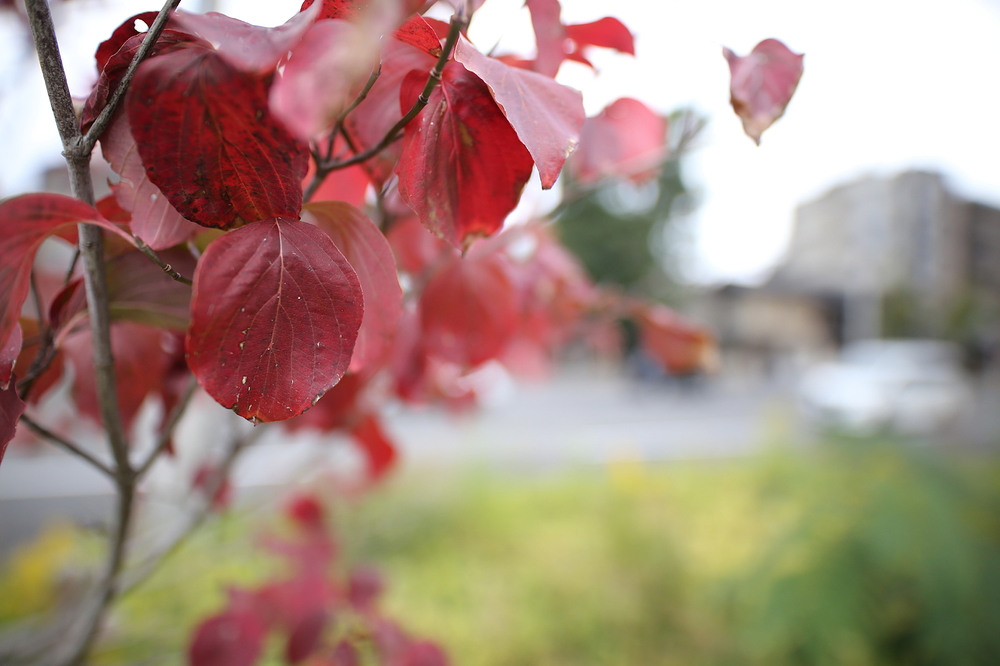 a little sign of autumn #7
