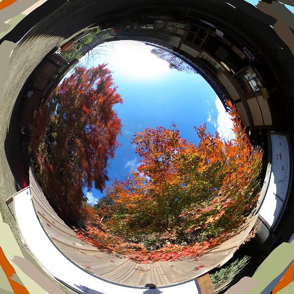 round autumn #1