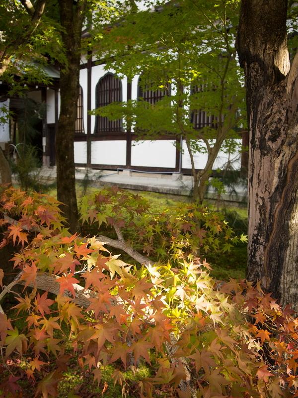 Autumnal view, November 17 #2