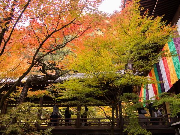 Autumnal view, November 17 #4