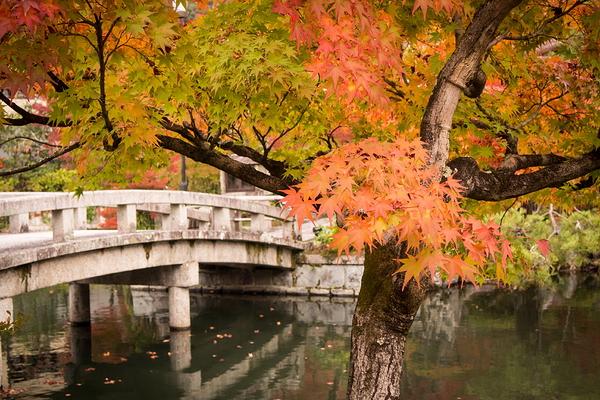 Autumnal view, November 17 #7