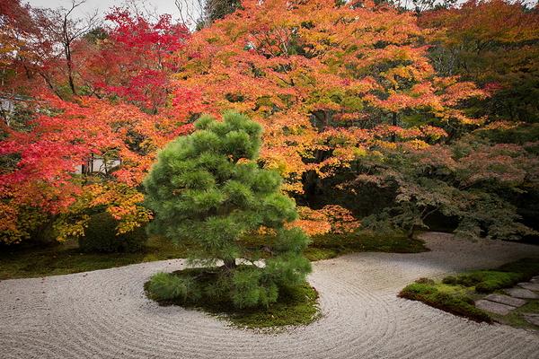 Autumnal view, November 17 #8